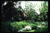 view [Untitled Garden in Los Angeles, California]: front garden. digital asset: [Untitled Garden in Los Angeles, California] [slide]: front garden.