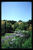 view [B. Fletcher Garden]: garden with typical California landscape setting. digital asset: [B. Fletcher Garden]: garden with typical California landscape setting.: 1992 Jun