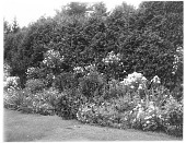 view [Mount Royal Park]: a garden border. digital asset: [Mount Royal Park] [glass negative]: a garden border.