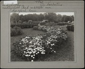 view [Elizabeth Park]: flower beds in the park, with parked automobiles in the background. digital asset: [Elizabeth Park] [photographic print]: flower beds in the park, with parked automobiles in the background.
