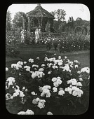 view [Elizabeth Park]: the rose garden and a gazebo, with a bed of 'Clio' roses in the foreground. digital asset: [Elizabeth Park]: the rose garden and a gazebo, with a bed of 'Clio' roses in the foreground.: [between 1905 and 1915]