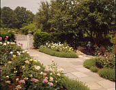 view [Iaccaci Garden]: rose garden with flagstone path and iron gate. digital asset: [Iaccaci Garden] [slide (photograph) and film transparency]: rose garden with flagstone path and iron gate.