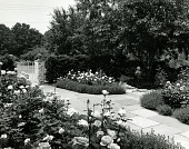 view [Iaccaci Garden]: rose garden with flagstone path and iron gate. digital asset: [Iaccaci Garden] [photographic print and safety film negative]: rose garden with flagstone path and iron gate.