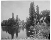 view [Royal Botanic Gardens, Kew]: the Lake, with two black-necked swans in the right foreground. digital asset: [Royal Botanic Gardens, Kew] [glass negative]: the Lake, with two black-necked swans in the right foreground.