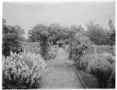view [Sutton Place]: one of the garden areas, probably in the walled garden. digital asset: [Sutton Place] [glass negative]: one of the garden areas, probably in the walled garden.