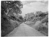 view [Miscellaneous Sites in Shere, Surrey, England, and Vicinity, Series 1]: a country road bordered by hedgerows in an unidentified location. digital asset: [Miscellaneous Sites in Shere, Surrey, England, and Vicinity, Series 1] [glass negative] a country road bordered by hedgerows in an unidentified location.