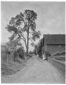 view [Miscellaneous Sites in Shere, Surrey, England, and Vicinity, Series 1]: looking along Church Hill. digital asset: [Miscellaneous Sites in Shere, Surrey, England, and Vicinity, Series 1] [glass negative]: looking along Church Hill.