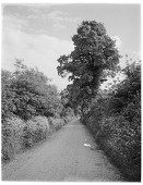 view [Miscellaneous Sites in Shere, Surrey, England, and Vicinity, Series 2]: a country road bordered by hedgerows, in an unidentified location. digital asset: [Miscellaneous Sites in Shere, Surrey, England, and Vicinity, Series 2] [glass negative]: a country road bordered by hedgerows, in an unidentified location.