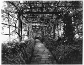 view [Unidentified Garden in England]: a rustic work garden pergola in an unidentified location. digital asset: [Unidentified Garden in England] [glass negative]: a rustic work garden pergola in an unidentified location.