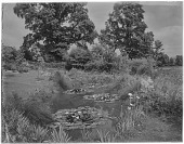 view Unidentified Site in England: a lily pond in an unidentified location. digital asset: Unidentified Site in England [glass negative]: a lily pond in an unidentified location.