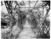 view [Great Tangley Manor]: pergola with wisteria canopy and border planting. digital asset: [Great Tangley Manor] [glass negative]: pergola with wisteria canopy and border planting.