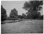 view [Miscellaneous Sites in Sussex, England, Series 1]: sheep grazing along the River Arun in Horsham, West Sussex. digital asset: [Miscellaneous Sites in Sussex, England, Series 1] [glass negative]: sheep grazing along the River Arun in Horsham, West Sussex.