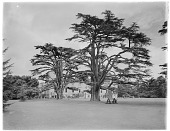 view [Wilton House and Vicinity]: the stately home and some of the garden's specimen trees. digital asset: [Wilton House and Vicinity] [glass negative]: the stately home and some of the garden's specimen trees.