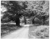 view [Sherwood Forest]: an unidentified location in Sherwood Forest. digital asset: [Sherwood Forest] [glass negative]: an unidentified location in Sherwood Forest.
