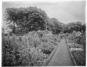 view [Clovelly Court]: the gardens, with a corner of the conservatory/orangerie/greenhouse visible on the left. digital asset: [Clovelly Court] [glass negative]: the gardens, with a corner of the conservatory/orangerie/greenhouse visible on the left.
