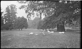 view [Unidentified Sites in England]: an unidentified park with geese. digital asset: [Unidentified Sites in England] [negative]: an unidentified park with geese.