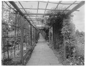 view [Gravetye Manor]: a vine-covered pergola, with the house barely visible at the far right. digital asset: [Gravetye Manor] [glass negative]: a vine-covered pergola, with the house barely visible at the far right.