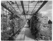 view [Gravetye Manor]: the vine-covered pergola, with the house visible on the right. digital asset: [Gravetye Manor] [glass negative]: the vine-covered pergola, with the house visible on the right.