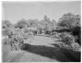 view [Orchards]: the Dutch Garden, a more formal part of the garden. digital asset: [Orchards] [glass negative]: the Dutch Garden, a more formal part of the garden.