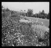 view [Wittington]: the house, a garden border, and topiary evergreens. digital asset: [Wittington] [lantern slide]: the house, a garden border, and topiary evergreens.