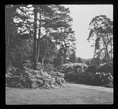 view [Dropmore]: rhododendrons and specimen trees. digital asset: [Dropmore] [lantern slide]: rhododendrons and specimen trees.