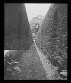 view [Sudeley Castle]: the topiaried yew hedge. digital asset: [Sudeley Castle] [lantern slide]: the topiaried yew hedge.
