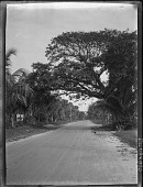 view [Untitled Garden in Florida]: palms at entrance. digital asset: [Untitled Garden in Florida]: palms at entrance.: [192?-193?]