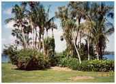 view [Untitled Garden]: Palm trees with an ornamental understory overlooking the Intracoastal Waterway. digital asset: [Untitled Garden]: Palm trees with an ornamental understory overlooking the Intracoastal Waterway.: 1993 Mar.