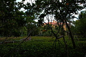 view [Palm Beach Garden]: Low growing red mangrove and black mangrove trees on the property. digital asset: [Palm Beach Garden]: Low growing red mangrove and black mangrove trees on the property.: 2016 Mar.