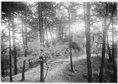view [Muskau Park and Vicinity]: stairs leading to a rustic gazebo in the park. digital asset: [Muskau Park and Vicinity] [glass negative]: stairs leading to a rustic gazebo in the park.