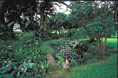 """view [Ahuimanu]: stone bridge over """"auwai"""" with impatience, red guava, bromeliads, and fern. digital asset: [Ahuimanu]: stone bridge over """"auwai"""" with impatience, red guava, bromeliads, and fern.: 2001 May."""