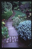 view [Bergmann-Grigsby Garden]: looking past the patio. digital asset: [Bergmann-Grigsby Garden]: looking past the patio.: 1998.