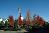 view [The Greensward of Market Square]: fall northeastern view, showing the yew hedge, European hornbeams, maples, flagpole, and tower. digital asset: [The Greensward of Market Square]: fall northeastern view, showing the yew hedge, European hornbeams, maples, flagpole, and tower.: 2005 Oct.