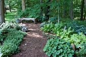 view [Frogmore]: a wooden bench, planter, statuary and shade plants. digital asset: [Frogmore]: a wooden bench, planter, statuary and shade plants.: 2012 Jun.