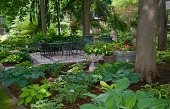 view [Jipson Place Garden]: seating area surrounded by hosta including 'cool as a cucumber,' 'friends,' and 'summer music.' digital asset: [Jipson Place Garden]: seating area surrounded by hosta including 'cool as a cucumber,' 'friends,' and 'summer music.'