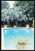 view [Strachan Garden]: swimming pool and palm trees. digital asset: [Strachan Garden]: swimming pool and palm trees.: 1987 October 1