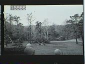 view [The Chimneys]: lawn with trees taken down. Stone wall with finials in foreground. digital asset: [The Chimneys]: lawn with trees taken down. Stone wall with finials in foreground.: 1954.
