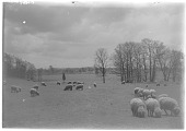 "view [Franklin Park]: the ""Country Park"" section of Franklin Park; sheep were kept there during the period from 1900 to around World War I. digital asset: [Franklin Park] [glass negative]: the ""Country Park"" section of Franklin Park; sheep were kept there during the period from 1900 to around World War I."