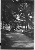 view [Franklin Park]: a path going uphill. digital asset: [Franklin Park] [glass negative]: a path going uphill.