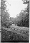 view [Franklin Park]: a road in the park. digital asset: [Franklin Park] [glass negative]: a road in the park.