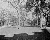 view Harvard University digital asset: Harvard University [glass negative]