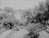 view [Miscellaneous Sites in Salem, Massachusetts]: looking toward the back of the garden at 26 Chestnut Street, showing the unusual gazebo-like arbor, with the rear of 365 Essex Street visible in the far left distance. digital asset: [Miscellaneous Sites in Salem, Massachusetts] [glass negative]: looking toward the back of the garden at 26 Chestnut Street, showing the unusual gazebo-like arbor, with the rear of 365 Essex Street visible in the far left distance.