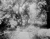 view [Miscellaneous Sites in Salem, Massachusetts]: the garden at 80 Federal Street, also known as the Peirce-Nichols House. digital asset: [Miscellaneous Sites in Salem, Massachusetts] [glass negative]: the garden at 80 Federal Street, also known as the Peirce-Nichols House.