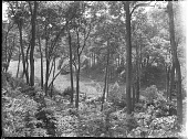 view [Unidentified Garden in Massachusetts, No. 1]: woodlands. digital asset: [Unidentified Garden in Massachusetts, No. 1]: woodlands.: [between 1920 and 1939]