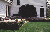 view [Perkins Garden]: a closeup of the terrace and the espaliered yew; the elm tree of 1986 is gone. digital asset: [Perkins Garden]: a closeup of the terrace and the espaliered yew; the elm tree of 1986 is gone.: 1995 May.