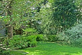view [Brown Street Green Garden]: Christmas, royal and cinnamon ferns in the shady wildflower garden. digital asset: [Brown Street Green Garden]: Christmas, royal and cinnamon ferns in the shady wildflower garden.: 2017 June 3