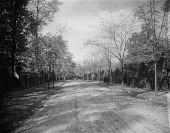 view [Roland Park] [glass negative]: an unidentified street lined with trees and ivy-covered walls. digital asset: [Roland Park] [glass negative]: an unidentified street lined with trees and ivy-covered walls.