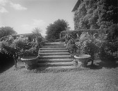 view [Windy Gates]: garden stairs with vine-covered house on right. digital asset: [Windy Gates] [glass negative]: garden stairs with vine-covered house on right.