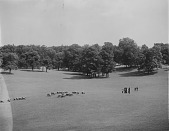 view [Druid Hill Park]: sheep grazing, probably in the meadow lawn below the boat lake and the Rogers mansion, with a group of park visitors looking on. digital asset: [Druid Hill Park] [glass negative]: sheep grazing, probably in the meadow lawn below the boat lake and the Rogers mansion, with a group of park visitors looking on.