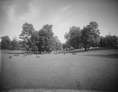 view [Druid Hill Park]: sheep grazing, probably in the meadow lawn below the boat lake and the Rogers mansion. digital asset: [Druid Hill Park] [glass negative]: sheep grazing, probably in the meadow lawn below the boat lake and the Rogers mansion, with park visitors in the distance.